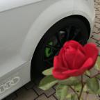 Meine November-Rose!